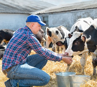 Cursa el Máster en Nutrición Animal y Dietética y fórmate en este ámbito profesional